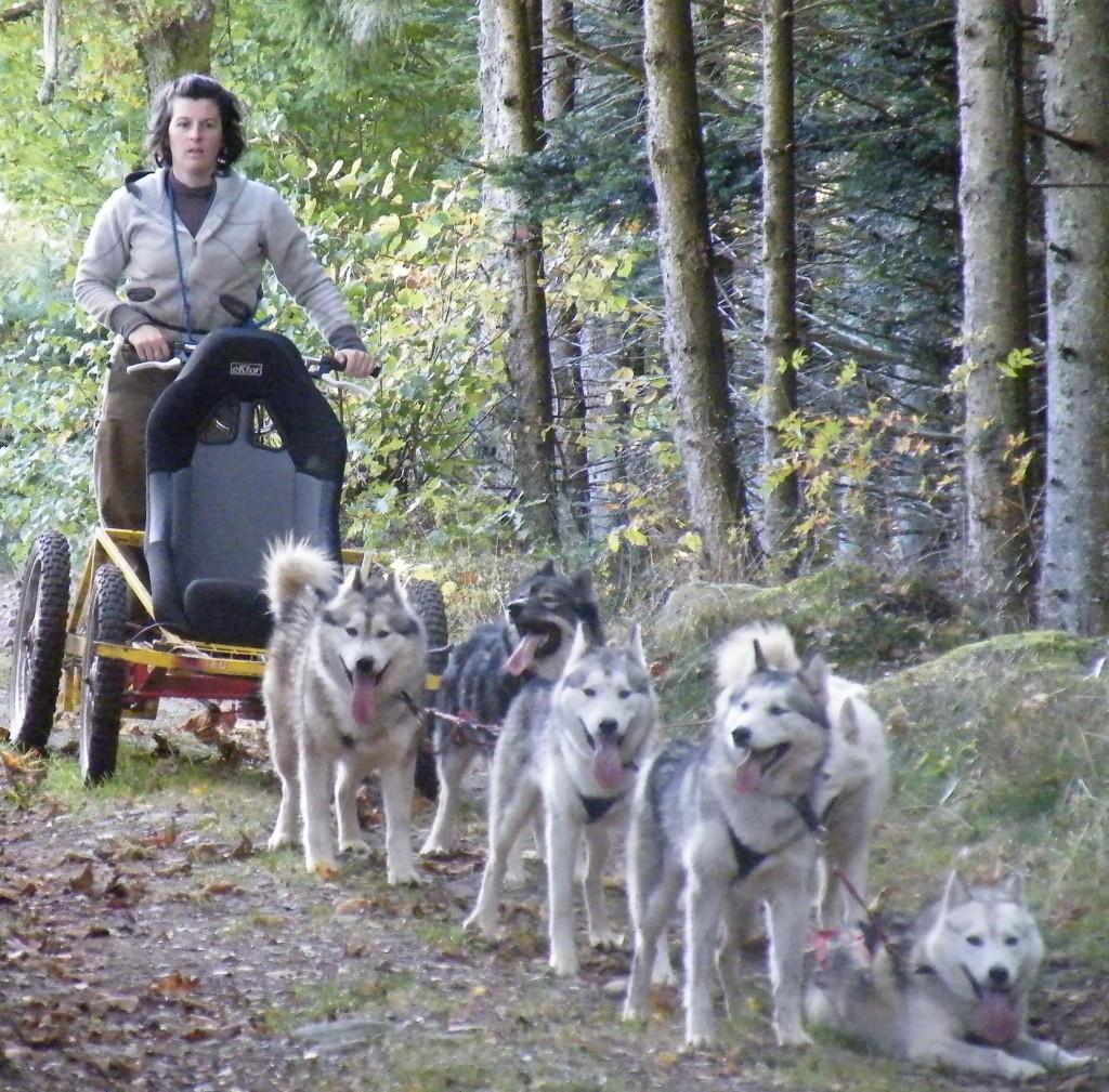 Op pad met de honden in een kart of slee